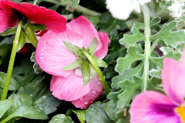 Shy flower